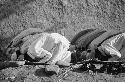 Muslims bow their heads toward Mecca in prayer....