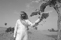 Falconry is popular in the United Arab Emirates...