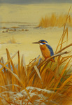 A Kingfisher Amongst Reeds in Winter, 1901 (pencil and watercolour heightened with white)