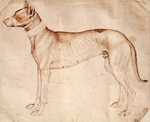 Study of hunt dog by Antonio Pisano known as Pisanello (pre-1395- ca 1455), drawing in pen and brown ink, 16x195 cm