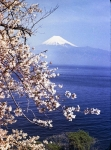 Mount Fuji, viewed from the Izu peninsular (photo)