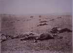 Dead soldiers on the Battlefield of Getyysburg, 1863 (b/w photo)