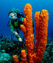 Diving amid the coral