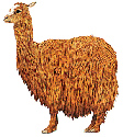 The llama is used to carry goods.