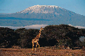 Africa's tallest mountain is Mount Kilimanjaro, a...