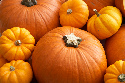 The vibrantly colored pumpkin's...