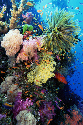 Coral diversity 						 						In this seascape off...