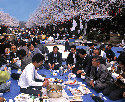 Locals enjoying the hanami festivities 						in...