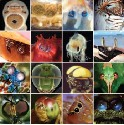 Invertebrate eyes. Row 1, left to right:...