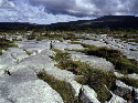 Clints and grikes of northwest Burren,...