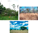 Savanna ecosystems of the world, featuring the...