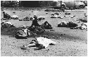Sharpeville Massacre, South Africa, March 21,...