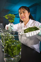 This food technology scientist is comparing the...