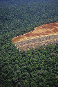 The photograph shows a swath of deforested land...