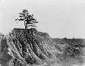Erosion Near Jackson, Miss. 1936. Walker Evans,...
