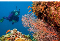 Scuba diver on the Great Barrier Reef, one of the...
