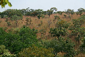 Tree savanna in Burkina Faso.