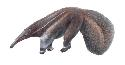 The giant anteater (Myrmecophaga tridactyla) is...