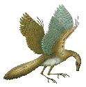 The earliest known recognizable bird,...
