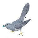 The common European cuckoo (Cuculus canorus) is...