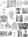 Cryptostome bryozoans (Scale of all...