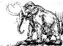 Reconstruction of the wooly mammoth...