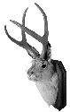 The jackalope, a humorous example of what...