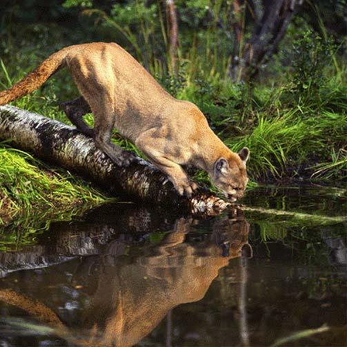 Habitat (Ecology) - Credo Reference