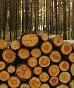Fuelwood consumption, commercial logging, and...