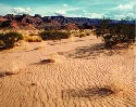 Among the hot deserts, the Mohave is one of only...