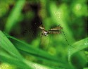 Mosquito-borne diseases include malaria, dengue,...