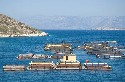 Fisheries in Chios Island, Greece Source: Iraklis...