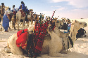 Nomadic Tuareg herders and camels in the Sahara...