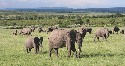 Tropical savanna in the Masai Mara, Kenya Source:...