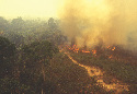 Fire in the Amazon rain forest. A significant...