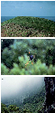Native flora and fauna of Lord Howe Island. (A) A...