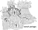 CORAL REEFS AND YOUR COASTAL WATERSHED